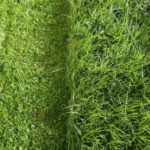Is it okay to mow after a heavy rain?
