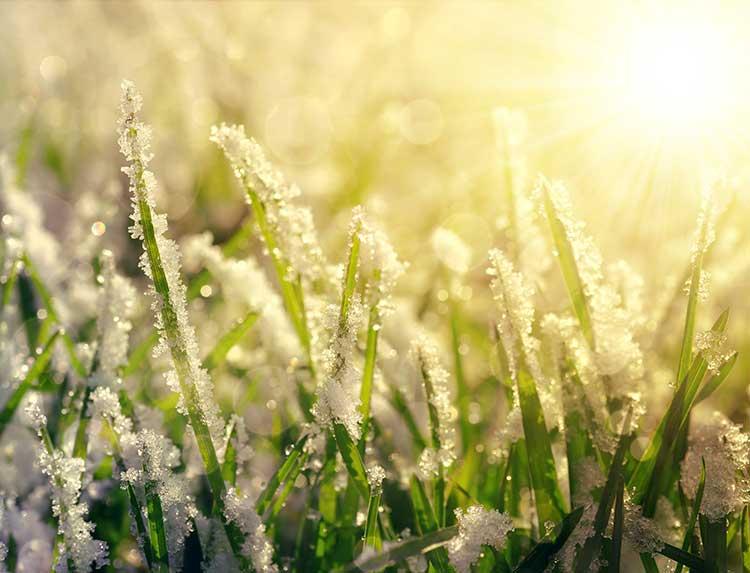 plan-around-last-frost-date