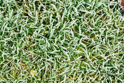 Prepare Lawn For Winter how to prepare a lawn for winter in texas | ryegrass seed dallas