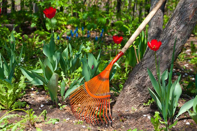 Spring-Cleaning-Tips-For-Your-Yard