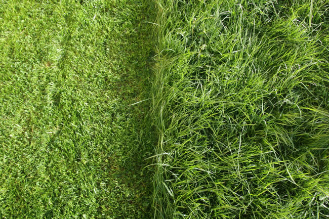 can-i-mow-after-heavy-rain