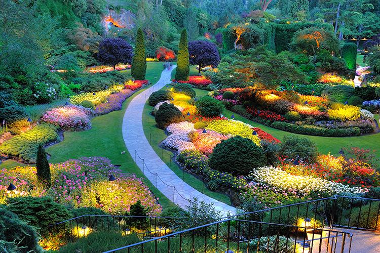 interesting-foliage-for-yard-landscape