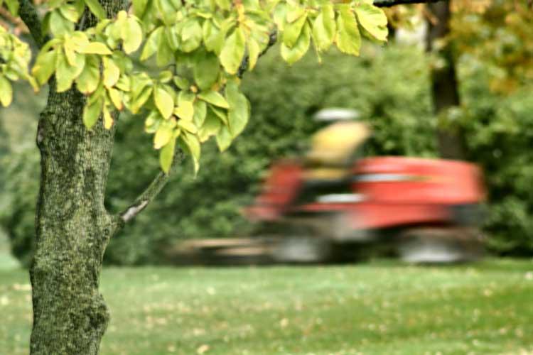 lawnmover-hit-tree