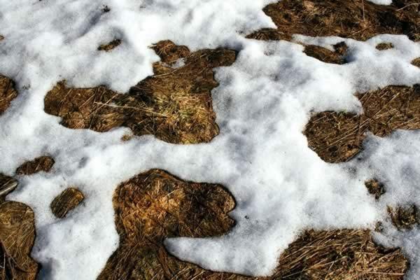 winter lawn care tips snow