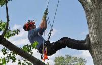 Arborist rigging and equipment Dallas