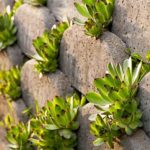 How To Get Started With Drought-Tolerant Xeriscaping In Texas