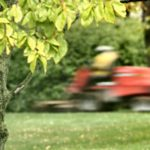 Here's What To Do If You Hit A Tree With Your Trimmer or Mower