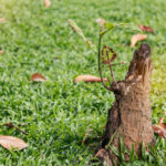 5 Ways To Take Care of Pesky Stumps In Your Yard