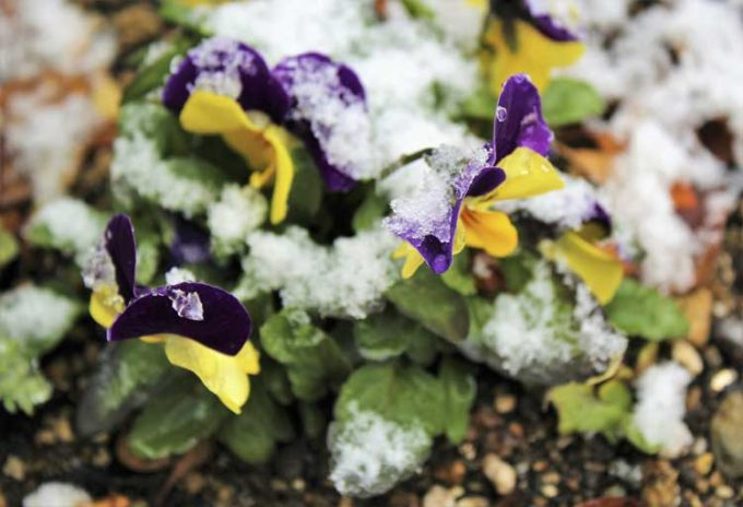 winter-garden-and-cold-tolerant-plants